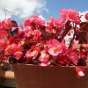 maceta con flores rosas muy bonitas