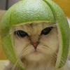 gato con ciítrico